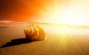 Seashell-and-sun